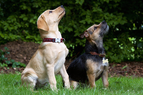 Talk to the Paw: Improving Communication With Your Dogs