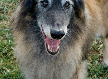 5 Things To Consider For Better Health In Our Senior Dogs