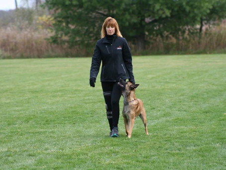 WHY REWARDING YOUR DOG CAN HURT YOUR TRAINING