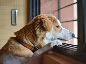 Helping Prevent Your Dog From Developing Separation Anxiety