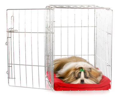 Fun with Crate Training!