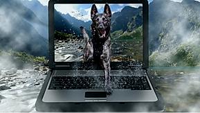 AQx05YLzTPOB32EaAbzJ_dog_Computer_Shephe