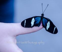 A Butterflies Landing