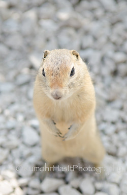 Up-Close And Squirrley
