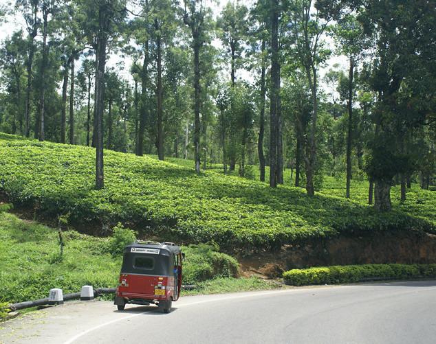 Kandy Nuwara Eliya Road