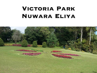 WHAT YOU CAN SEE IN NUWARA ELIYA