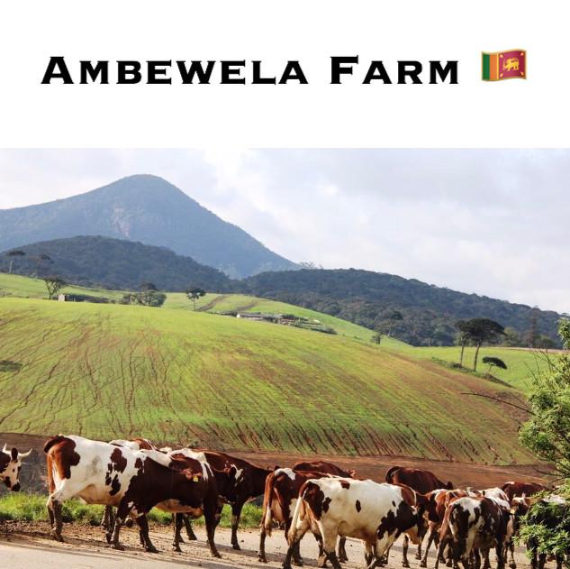 AMBEWELA FARM