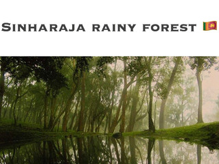 SINHARAJA RAINY FOREST 🌳