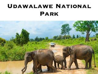 UDAWALAWE NATIONAL PARK SRILANKA