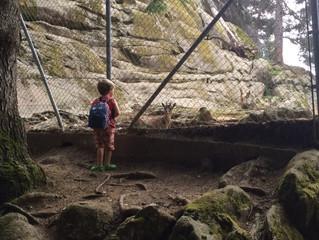 В Горы: Zoo des Marécotte