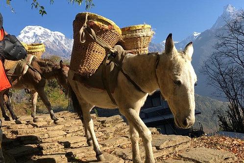 Nepal Mardi Himal Trekking