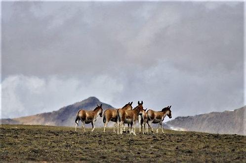 Romantischer Trek durchs Limi-Tal
