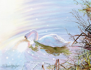 C73. Swan Lake.