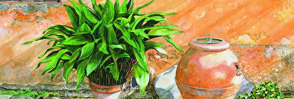 B24. Olive Jar with Hosta, Florentino.