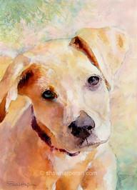 C85. 'Puppy Love'.