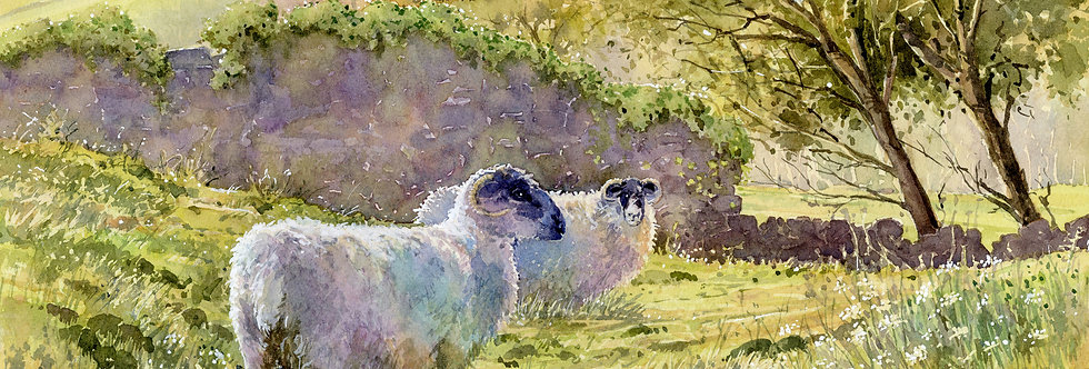 C39. Two Sheep in a Meadow.