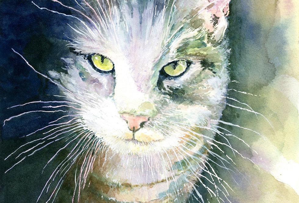 C25. Shadow Cat.