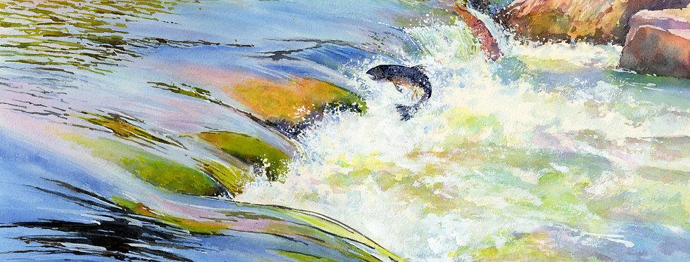C87. Shimna Salmon Leap.
