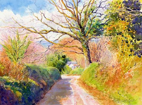 C66. Letrim Autumn lane.