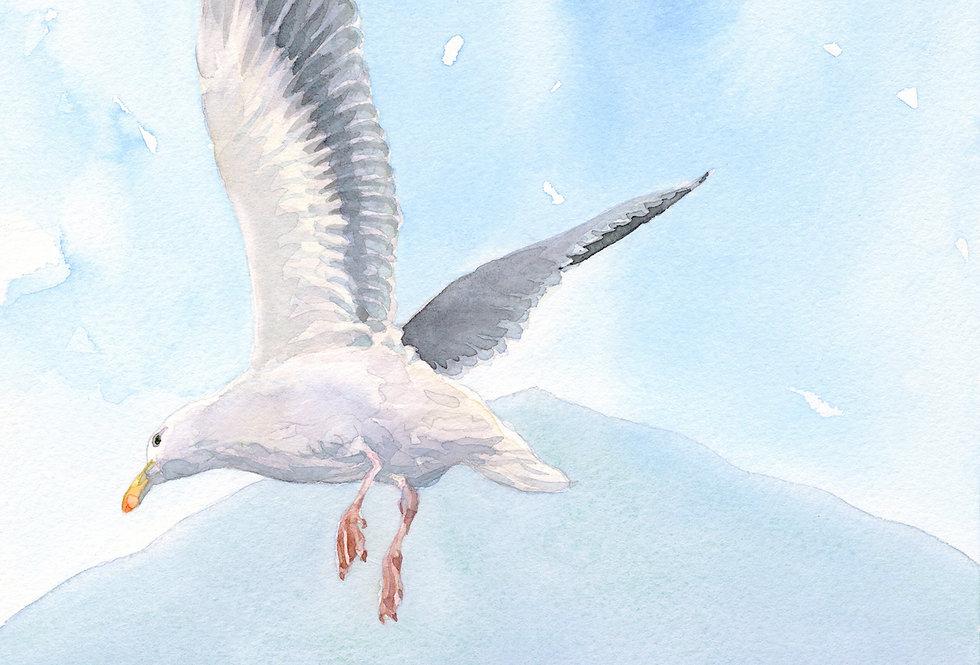 C4. Donard Seagull.