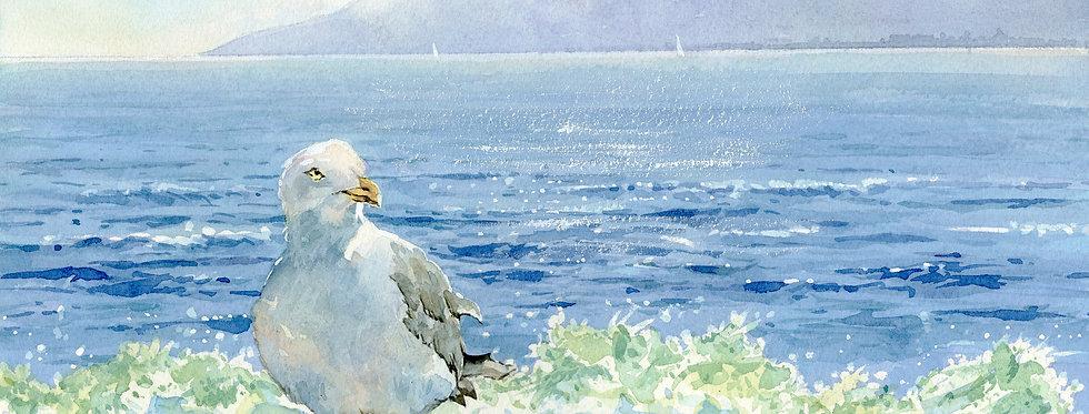 C14. Seagull Surf 1.