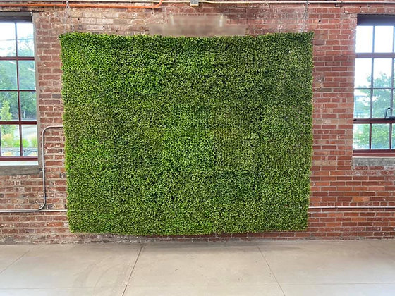 boxwood hedge wall