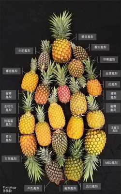 Taiwan Pineapple.jpg