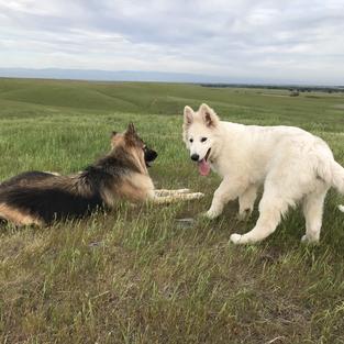 Heidi and Ozzy