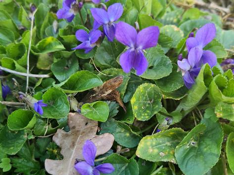 Violette Power!