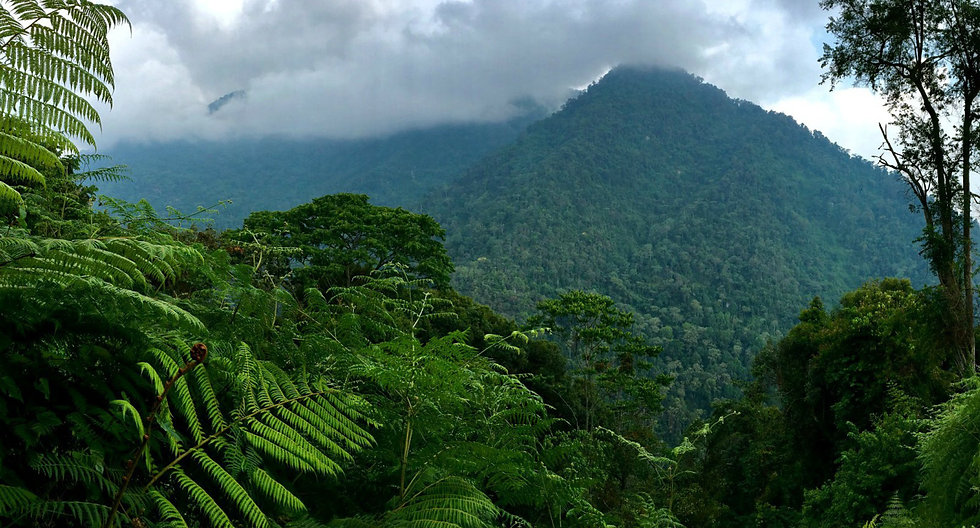 Jungle-Rot.jpg