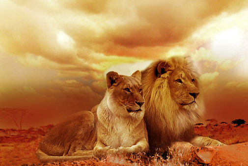 A lioness and a lion symbolize the roar of awakening