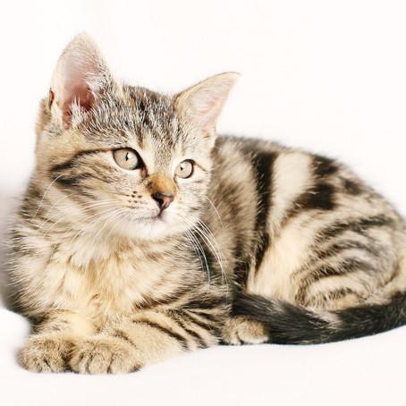 Tierliebe als seelische Medizin