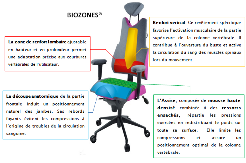 postergo biozones