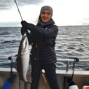 Coalfish action