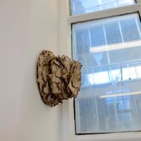 Termite Architecture, Cardboard Pulp