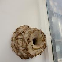 Termite Architecture, Cardbaord Pulp