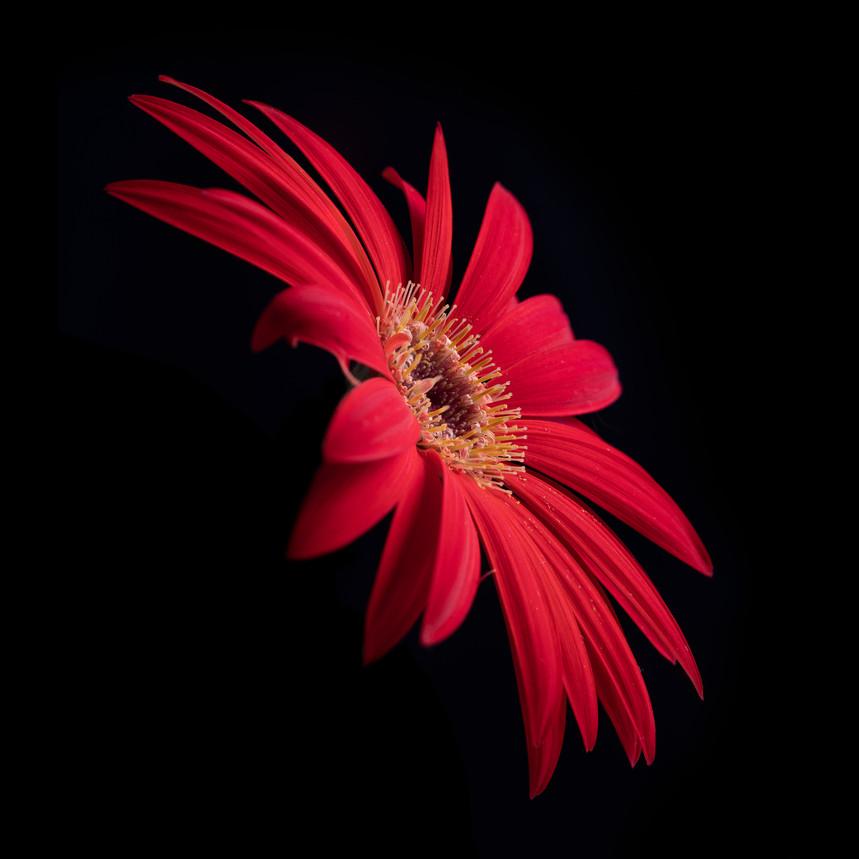 bloem-24 april 2020-118-bewerkt-bewerkt-2.jpg