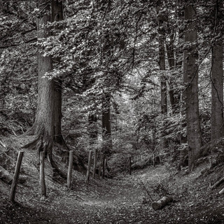fairytale forest.jpg