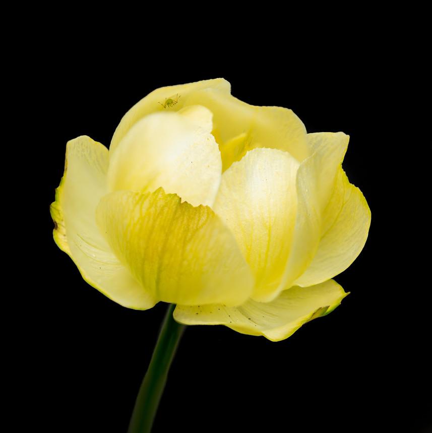 bloemen-08 mei 2020-188-bewerkt.jpg