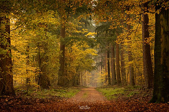 Speulderbos - color explosion.jpg