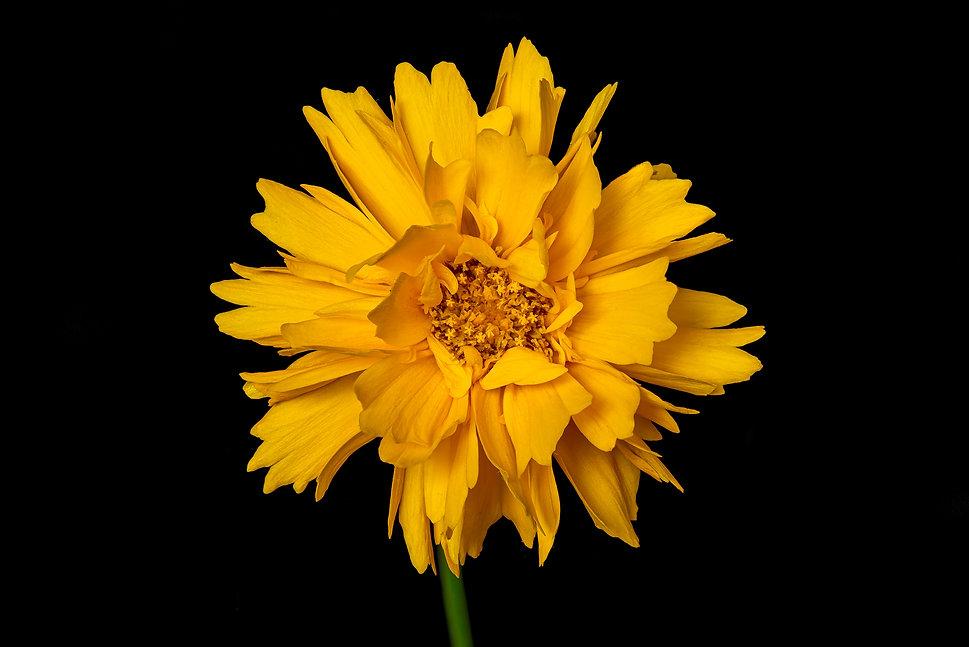 bloem-16 juni 2020-110-bewerkt-bewerkt.j
