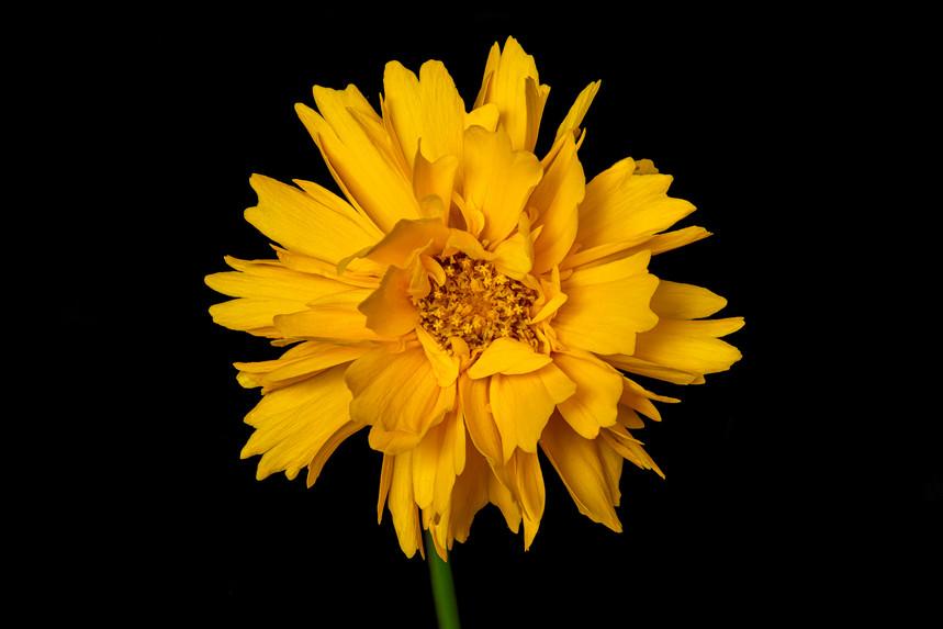 bloem-16 juni 2020-110-bewerkt-bewerkt.jpg