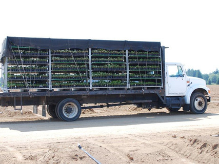 2014 August 20 - Planting Sturtz, Chilto