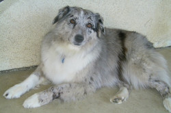 Trudy ((Our First Aussie))