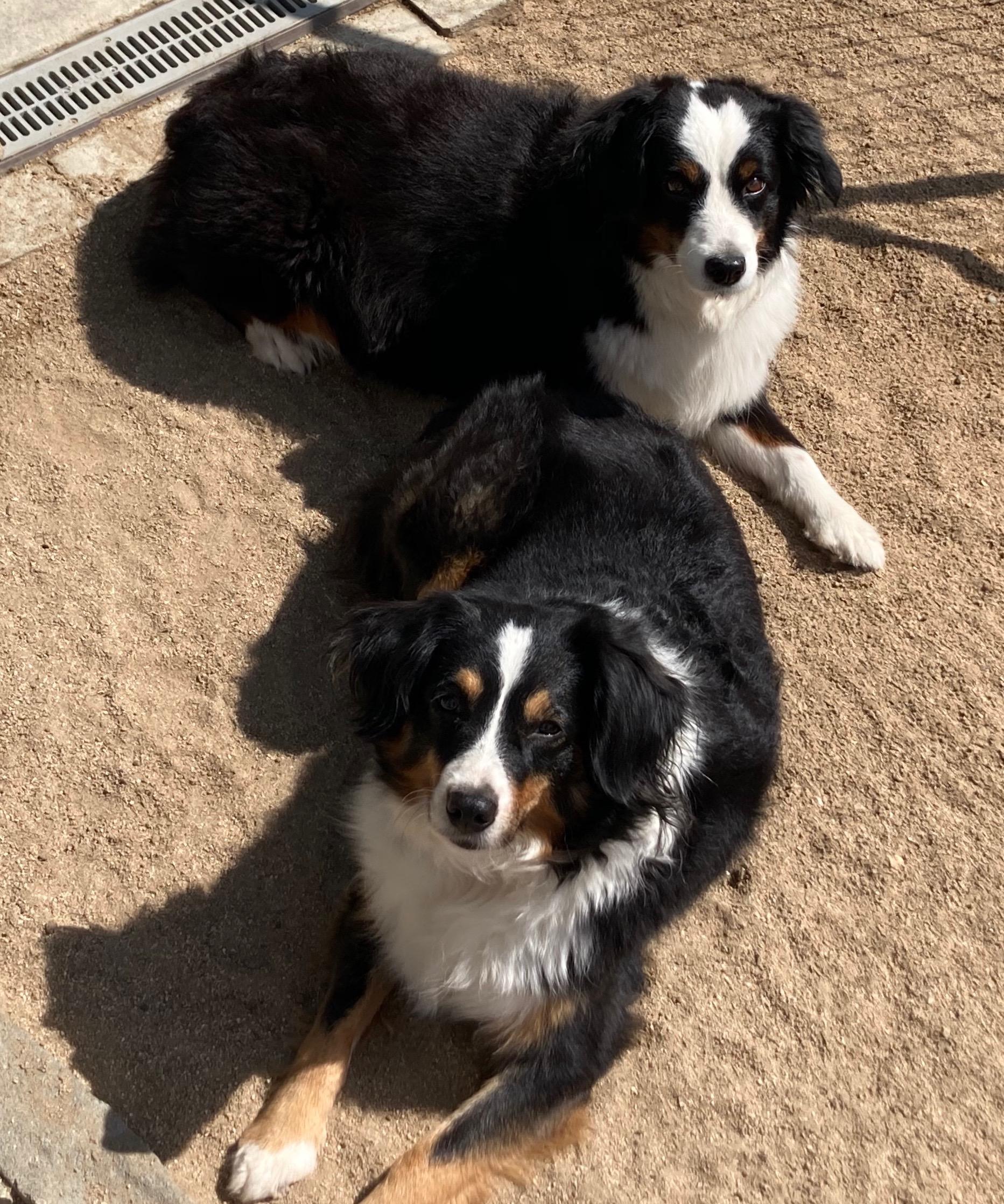 Tessa & Leelo Sister Love