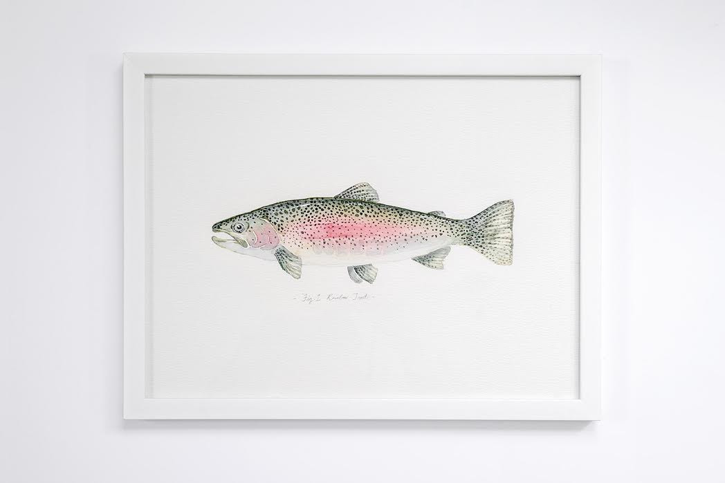 "Fig. 1 Rainbow Trout 12"" x 16"""