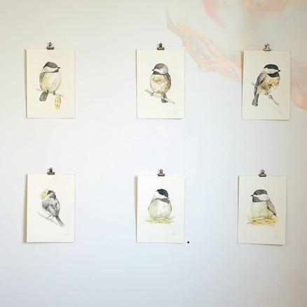 rachel-rivera_nvrlnd-residency chikadees