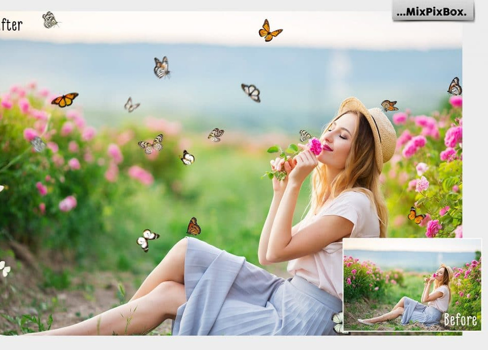 Butterfly Clipart 2020: What and Where to Search for?