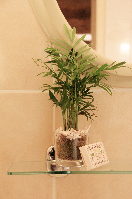 chambre-jaune-plante-decorative-salle-de