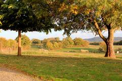 Jardin-de-la-Metairie-du-Bourg-chambres-